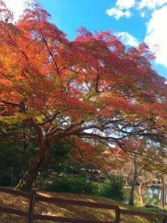 紅葉の秋?