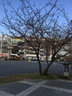 少し早い春がきた!!