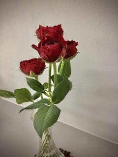 今日のお花🌼