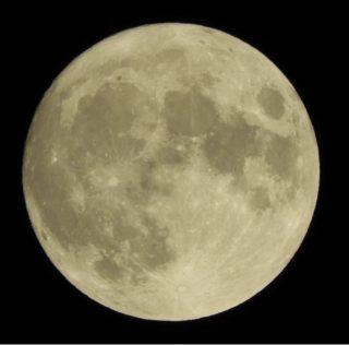 月のウサギ🐇
