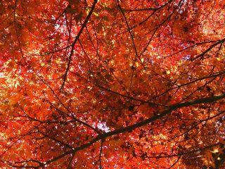 🍁秋満喫🍁