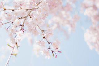 春になったら〜♪